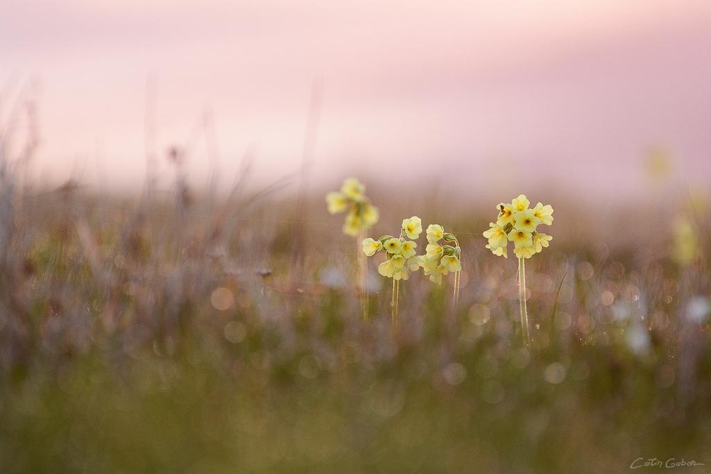 DSC_9709 floralis