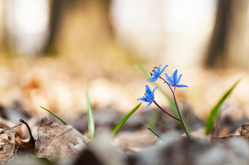 Floralis calingabor.ro 11