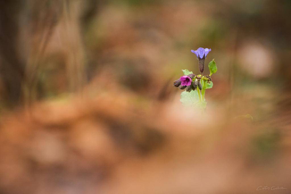Floralis calingabor.ro 6
