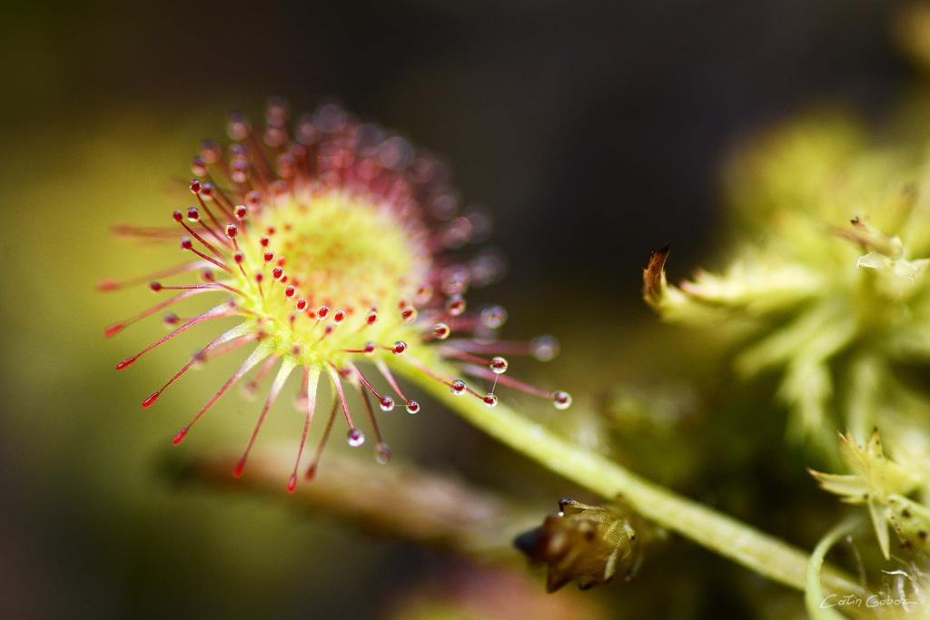 Floralis calingabor.ro 10