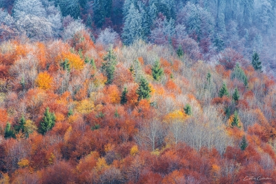 Colors of the forest 15
