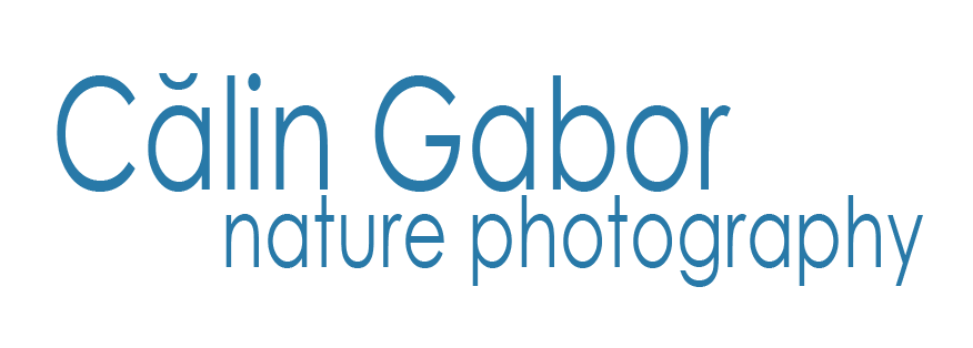 Calin Gabor Logo