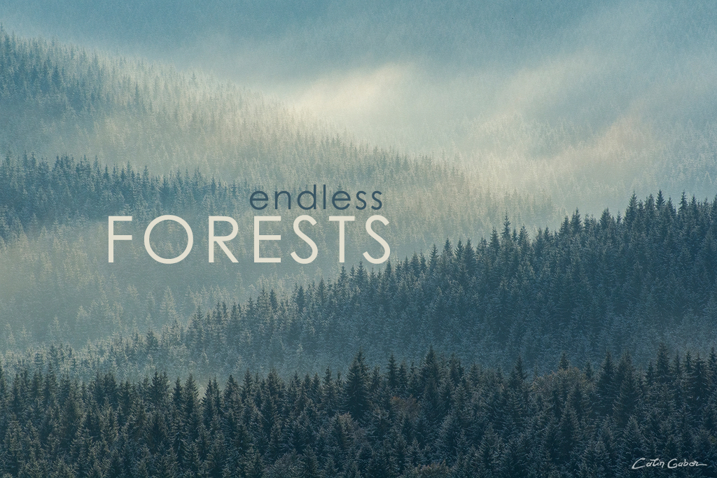 Photo tours in the endless Carpathian forests