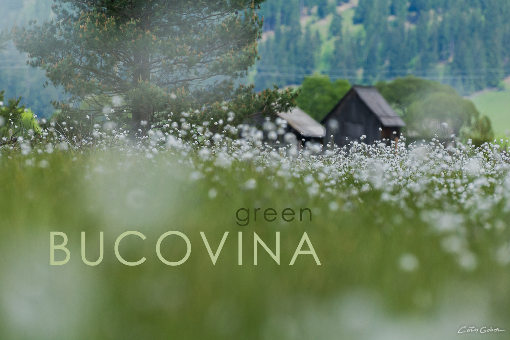 Photo tours in green and idilique Bucovina