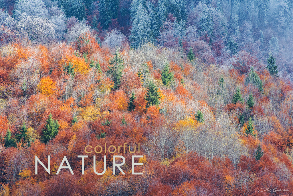 Photo tours in colorful nature