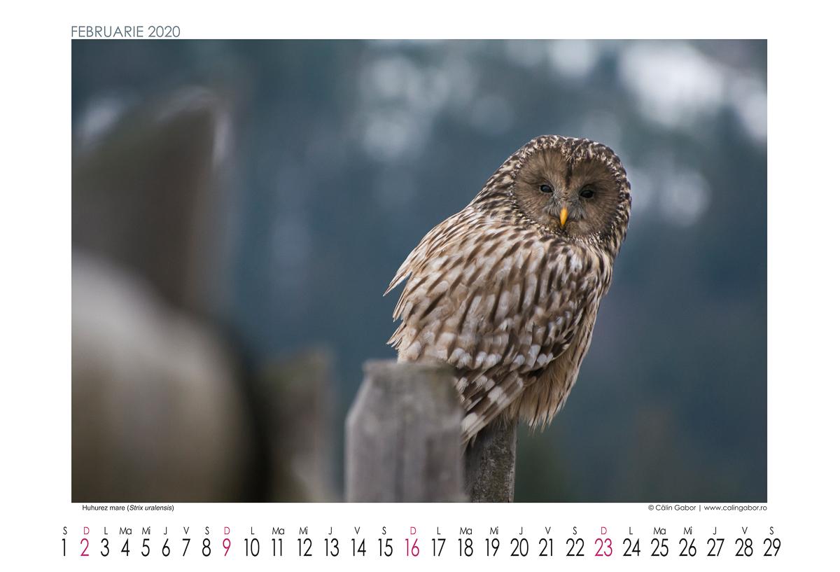 Calendar 2020 de perete - Natura, Peisaje, Viata salbatica