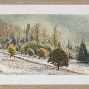 Printre anotimpuri tablou 60x40 cm